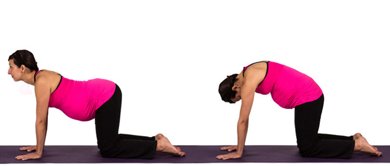 catcow pose prenatal yoga